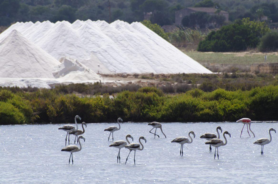 El parque Natural de Ses Salines